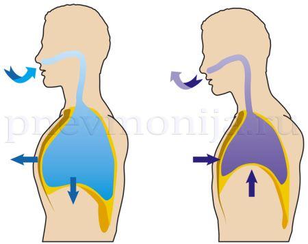 движения грудной клетки при вдохе и выдохе