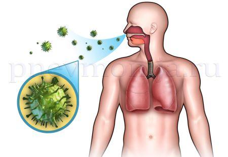 как вирус пневмонии приникает через органы дыхания в организм