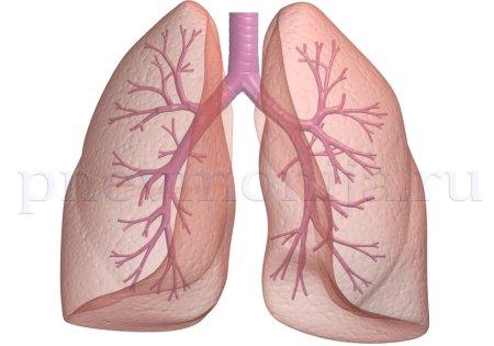 бронхиальная пневмония