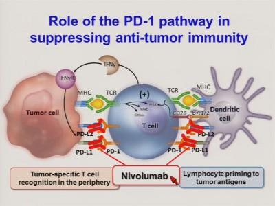 Механизм действия лекарства Nivolumab на раковую клетку