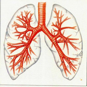 Причины и факторы возникновения заболевания