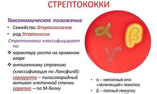 Классификация возбудителей ангины
