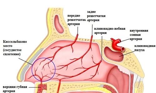 Почему из носа течет кровь