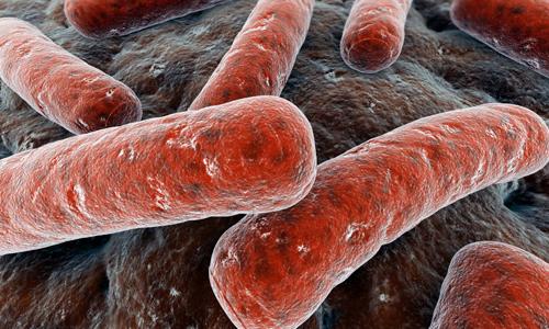 Особенности возбудителя туберкулеза