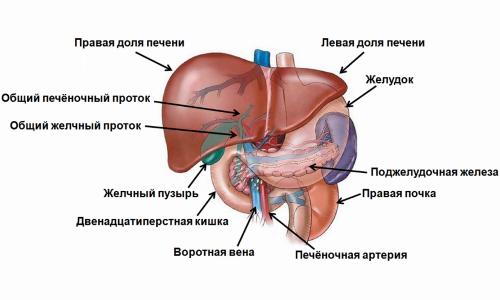 Основные симптомыинфекции