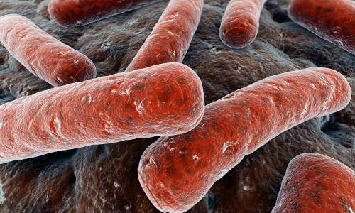 Бактерии - причина туберкулеза