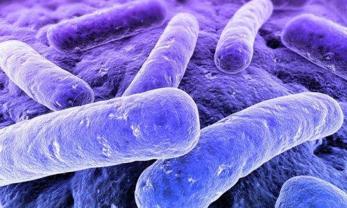 Клиническая картина туберкулеза