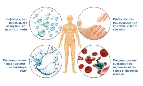 Возможные способы заражения микобактериями Коха