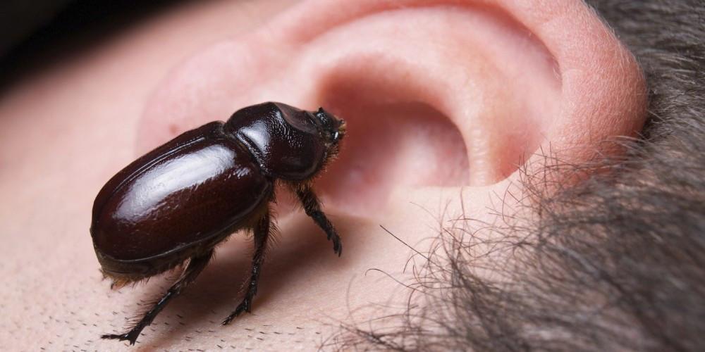Может ли насекомое залезть в ухо