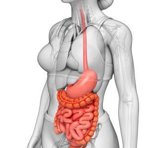 Болезни органов пищеварительного тракта