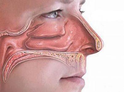 Роль полости носа
