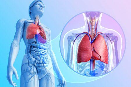 Анатомия плевральной полости