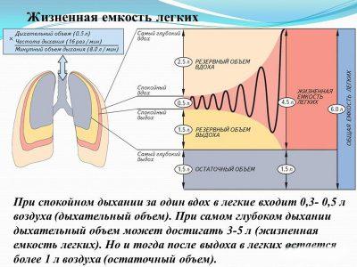 Механизм дыхания у здорового человека